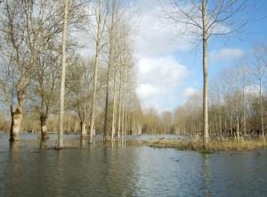 Le Marais Poitevin en hiver - La Venise verte inondée