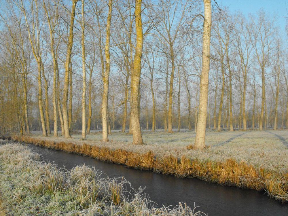 Gelée matinale dans le Marais Poitevin