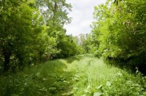 Chemin pédestre dans la Venise Verte à Aziré