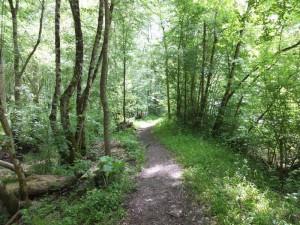 Sentier pédestre en Vendée dans le Marais Poitevin proche d'Aziré