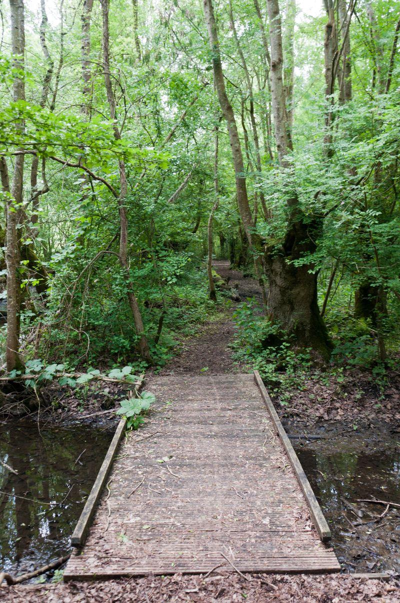 Pont en bois pour piéton dans la Venise Verte en Vendée proche d'Aziré