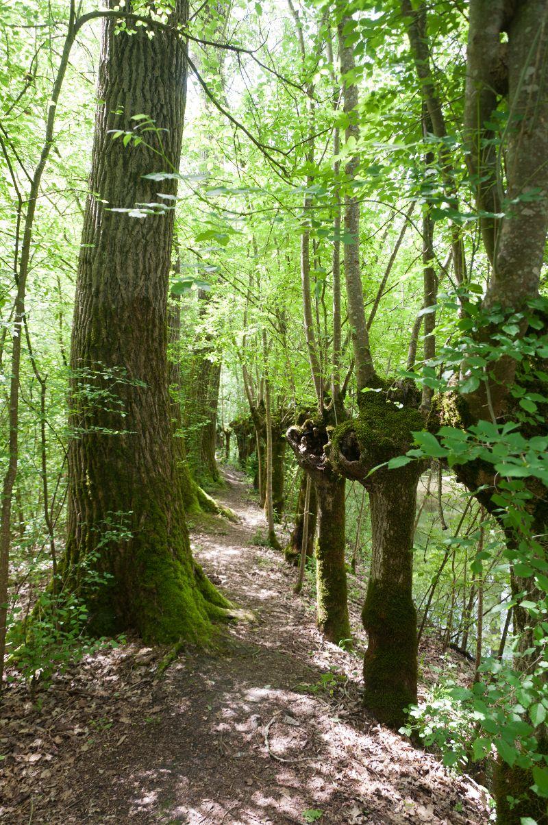 Sentier dans le Marais Poitevin à Aziré
