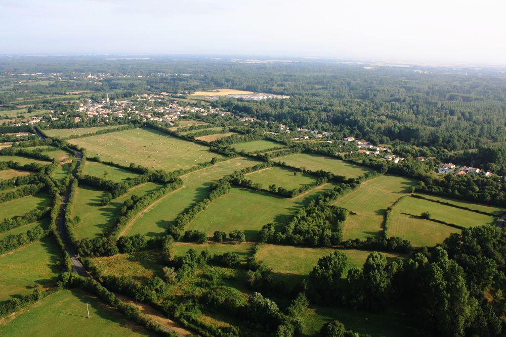 4-Le-Vanneau-dans-le-Marais-Poitevin