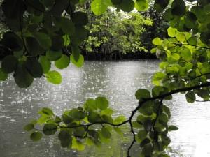 Pluie sur la Sèvre niortaise entre Charay et La Crèche