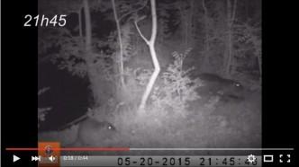 photo d'illustration de vidéo nocturne de ragondins dans le marais poitevin