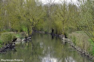 Le Canal de Forges à Saint Hilaire la Palud dans le Marais Poitevin
