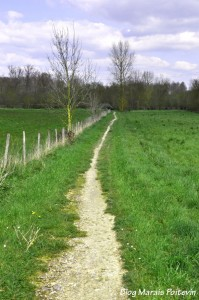 Chemin blanc de randonnée dans le Marais Poitevin à Saint Hilaire la Palud