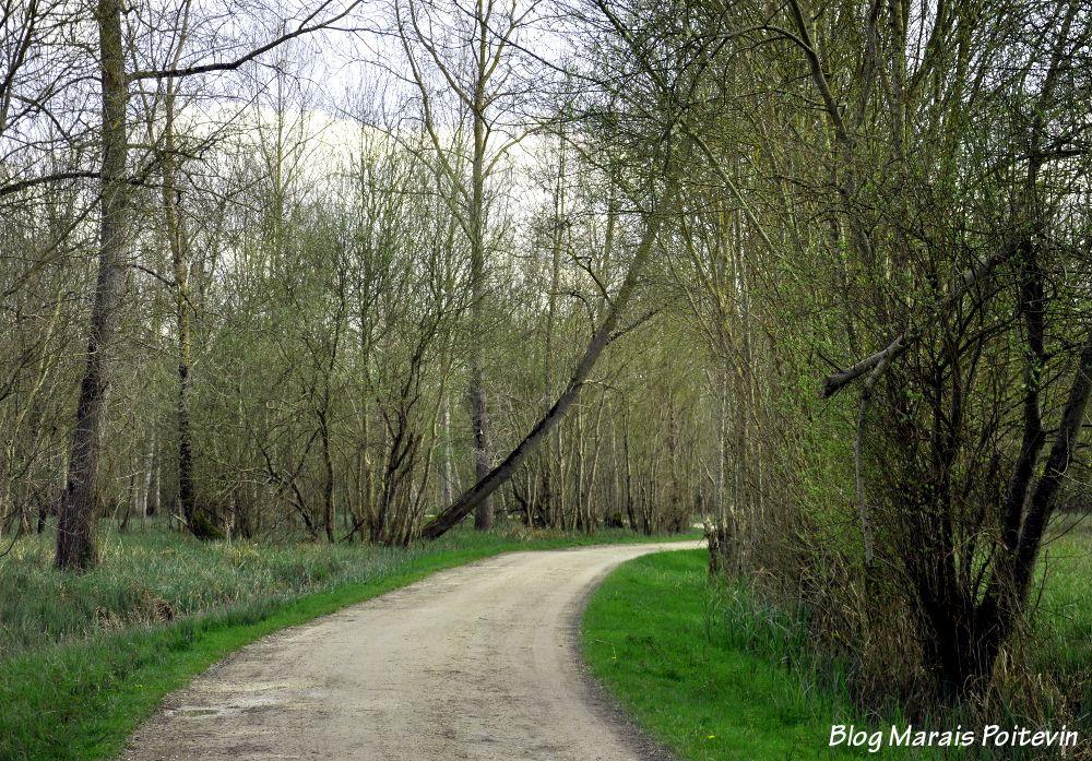 Chemin blanc dans le marais de monégrier à Saint Hilaire la Palud