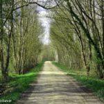 Saint-Hilaire-la-Palud à Vélo