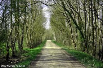 Chemin blanc dans la Venise Verte à Saint-Hilaire-la-Palud