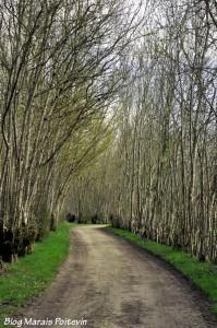 Chemin de randonnée dans le Marais Poitevin à Saint-Hilaire-la-Palud