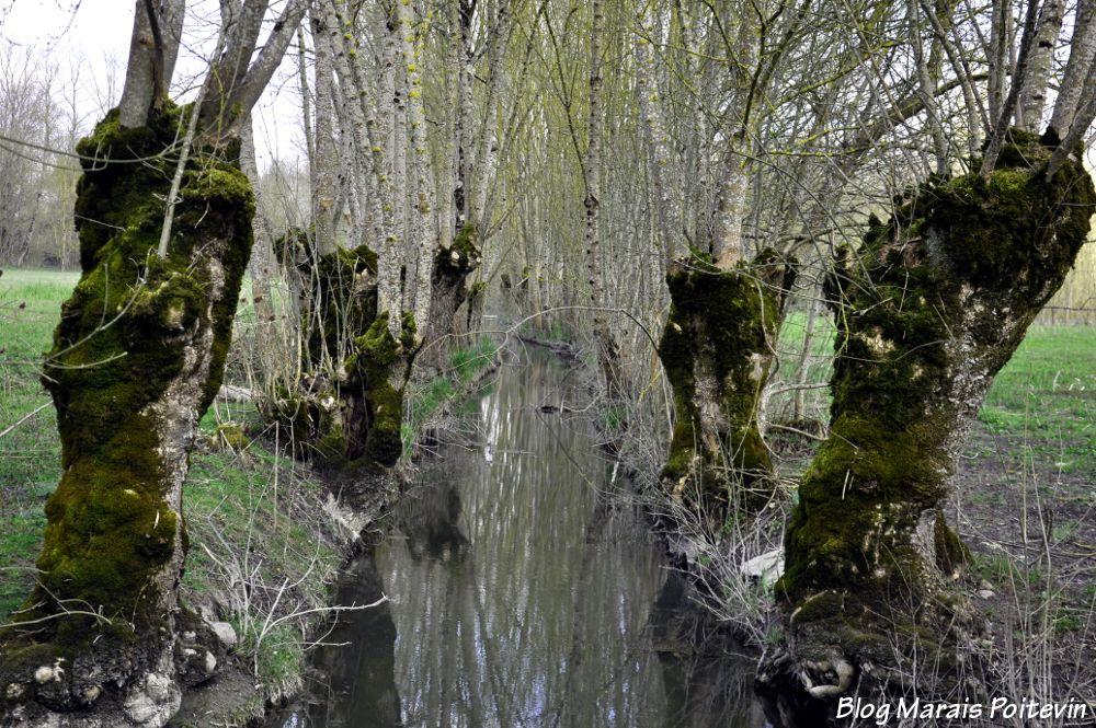 Conche du Marais Poitevin à Saint-Hilaire-la-Palud