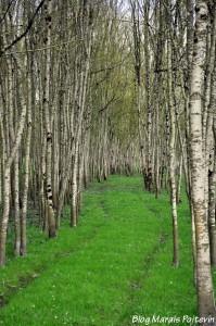 Le marais poitevin sauvage à Saint-Hilaire-la-Palud dans les Deux Sèvres
