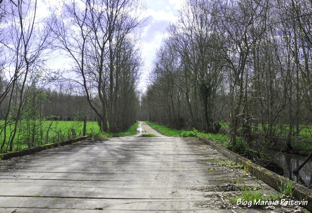 Chemin du marais mouillé à Saint Hilaire la Palud dans les Deux Sèvres