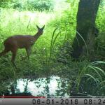Piège vidéo Marais Poitevin Juillet 2016