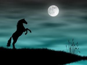 Légende du cheval mallet dans le marais poitevin