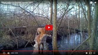 piège vidéo marais poitevin janvier 2017
