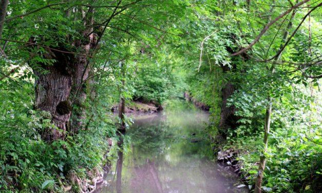 Amuré – Rando de la plaine au marais