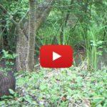 Piège vidéo Marais Poitevin Mai 2017