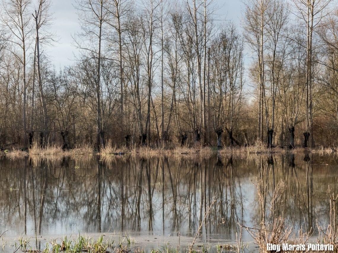 montée des eaux marais poitevin