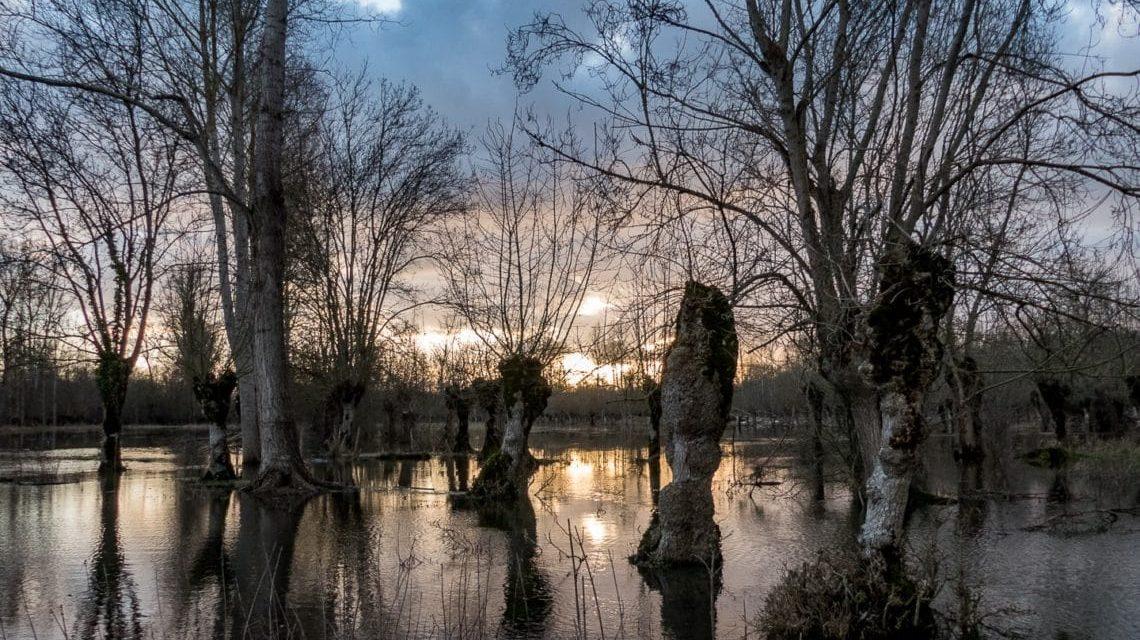 Inondations dans le Marais Poitevin – Janvier 2018