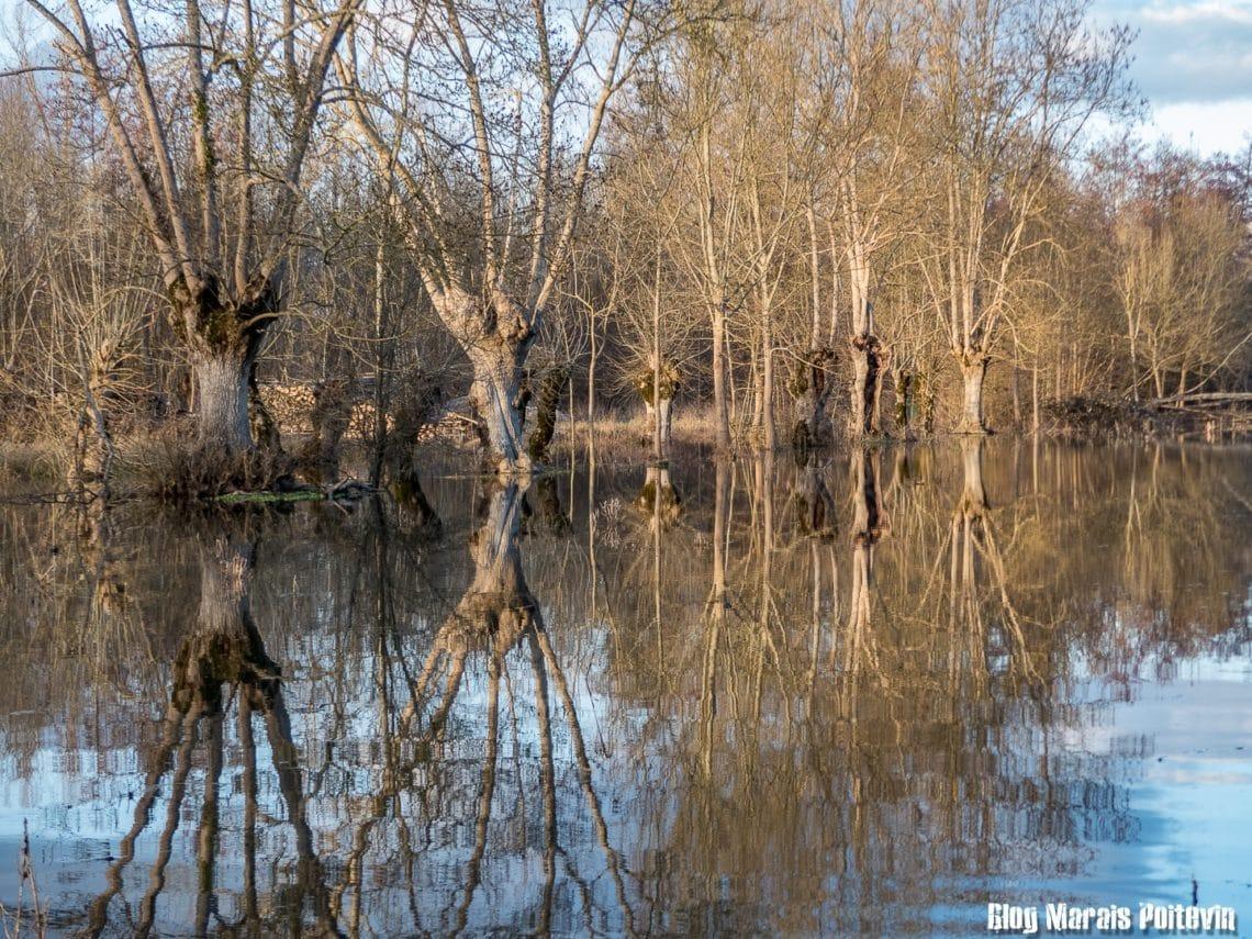 inondation dans le marais poitevin deux sèvres