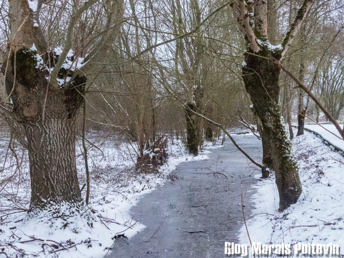 freines tetards et canaux gelés dans le Marais Poitevin