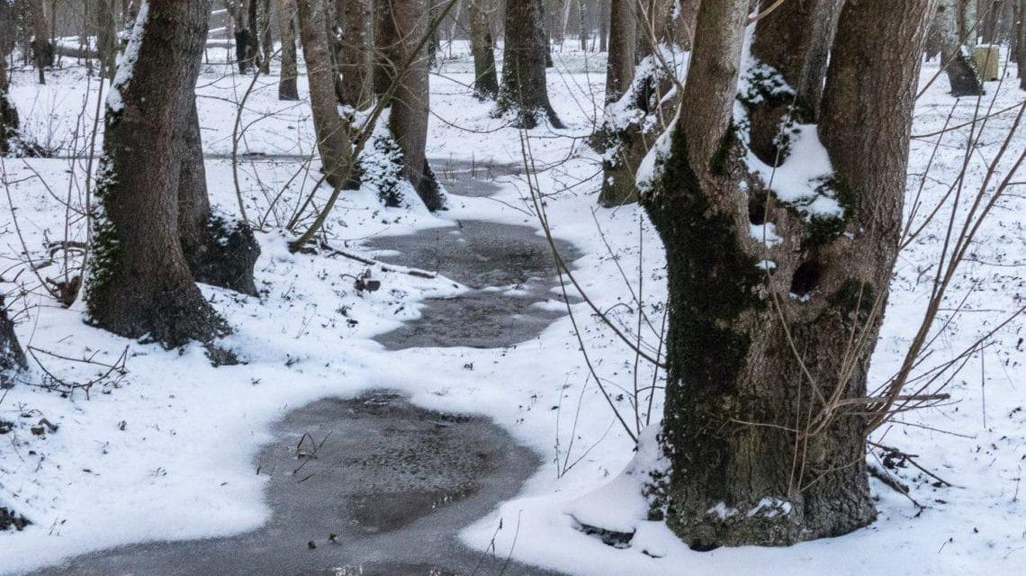 Neige dans le Marais Poitevin : hiver 2018