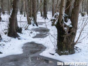 Marais Poitevin sous la neige 2018