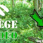 Chevrette et ses petits – Piège vidéo Juin 2017