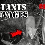 Vidéo animaux du marais en mars 2018