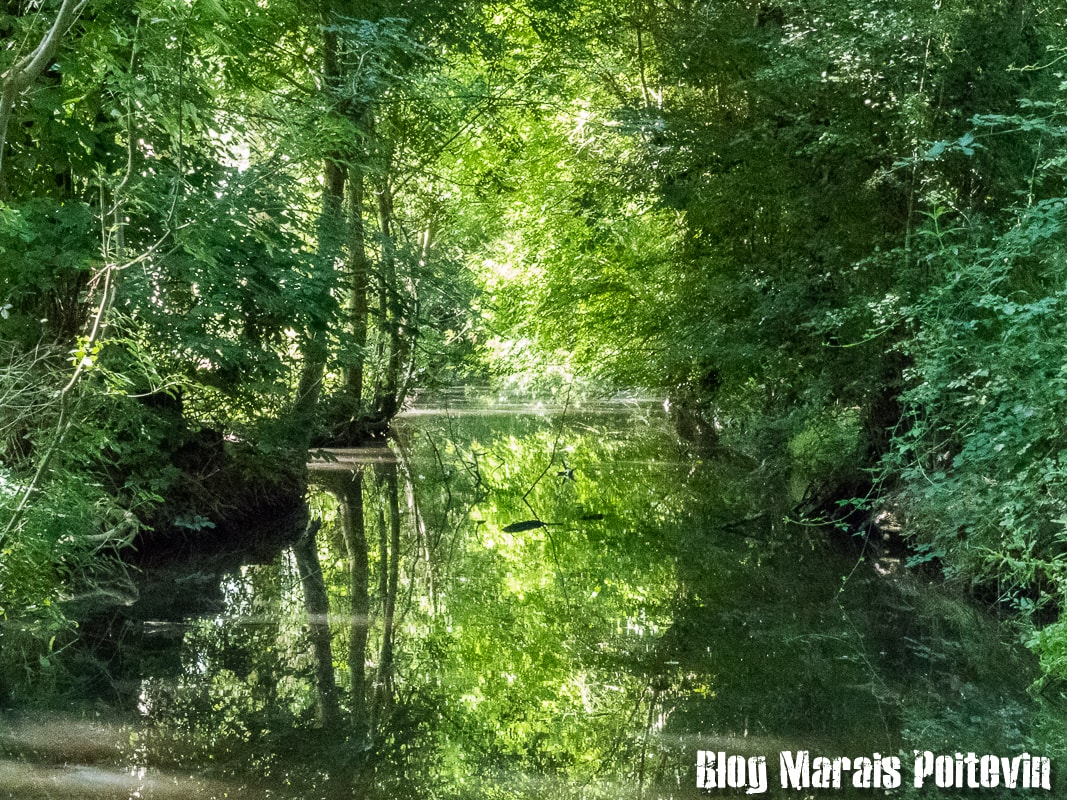 photo marais poitevin aout 2018