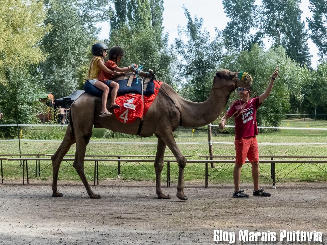 Fête du cheval sainte christine marais poitevin 1