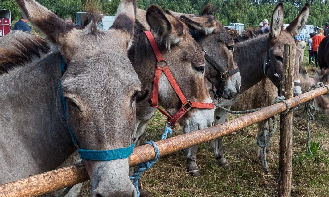 Fête de l'âne, du cheval et du poney à Sainte-Christine