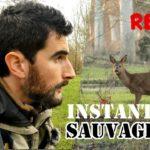 Instants sauvages – Observer les chevreuils