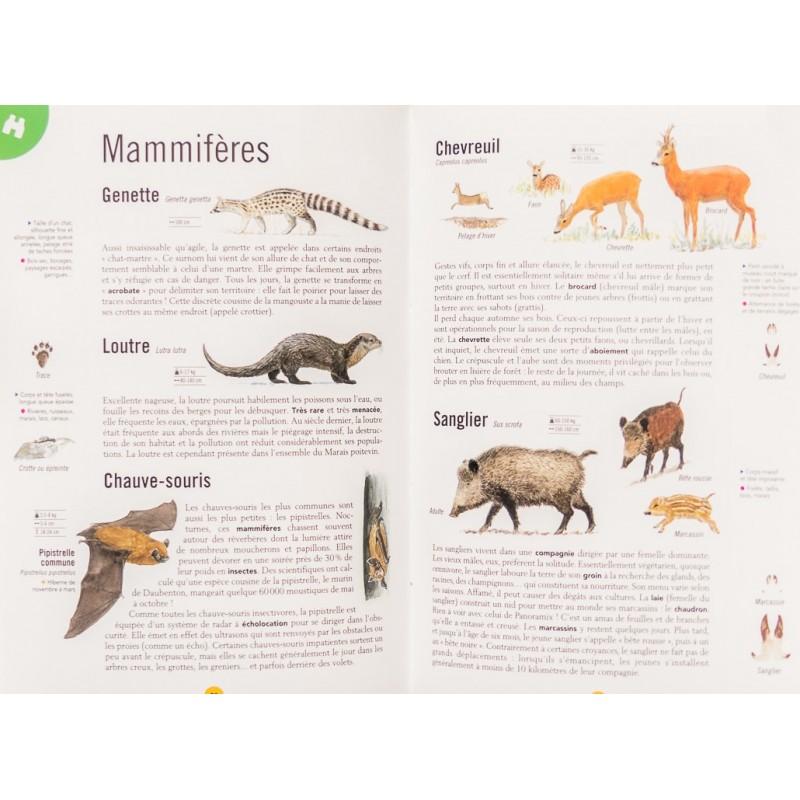 balades-nature-parc-naturel-regional-marais-poitevin (2)