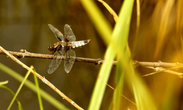 Les Sons de la Nature #1 Printemps dans le Marais Poitevin