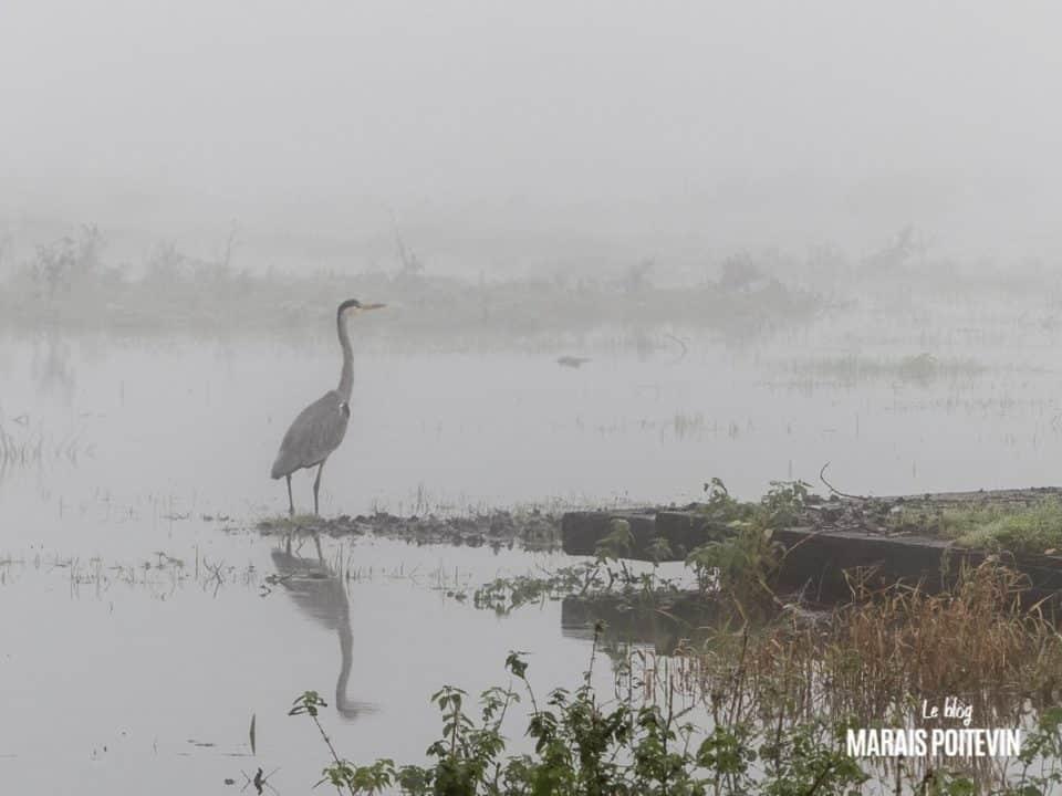 évaille brouillard marais poitevin novembre 2019 - 10