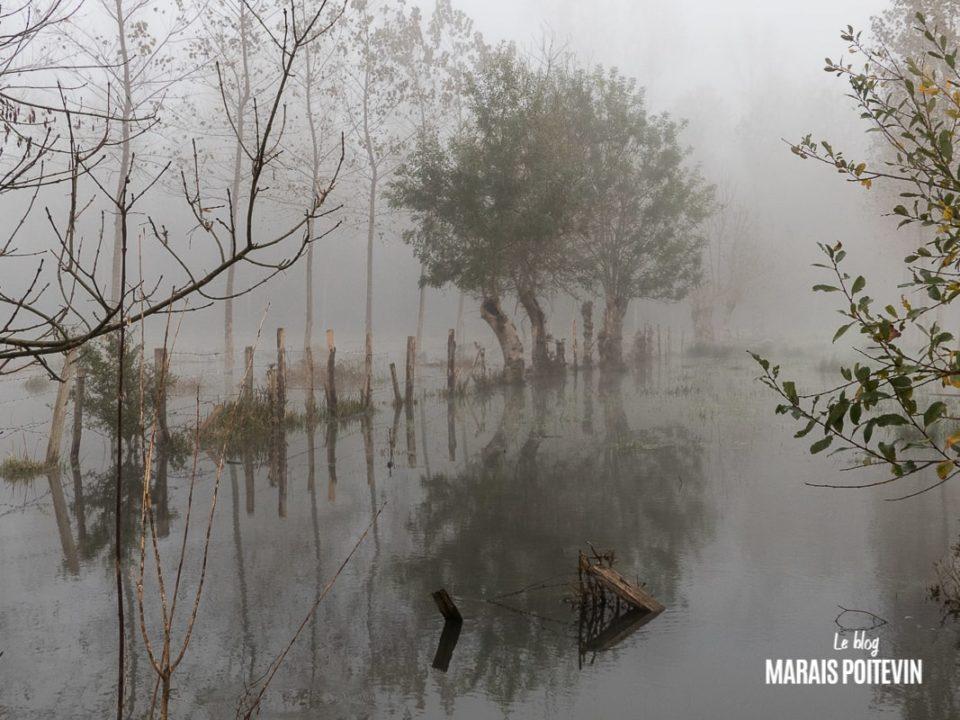 évaille brouillard marais poitevin novembre 2019 - 11
