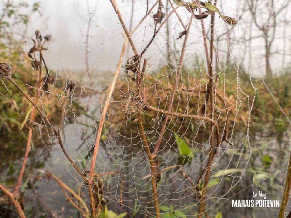 évaille brouillard marais poitevin novembre 2019 - 12