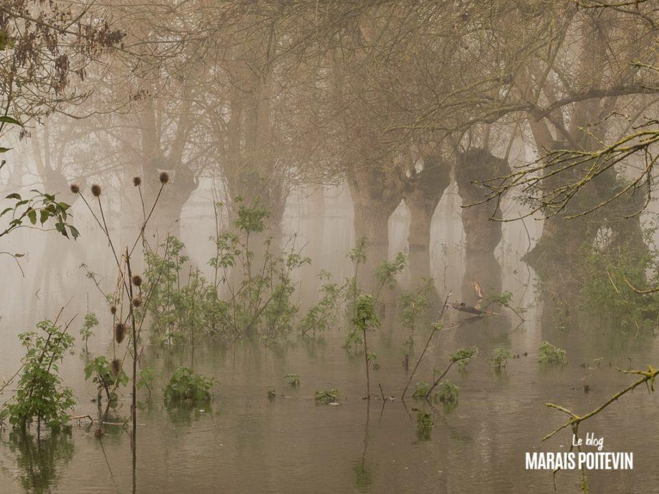évaille brouillard marais poitevin novembre 2019 - 16