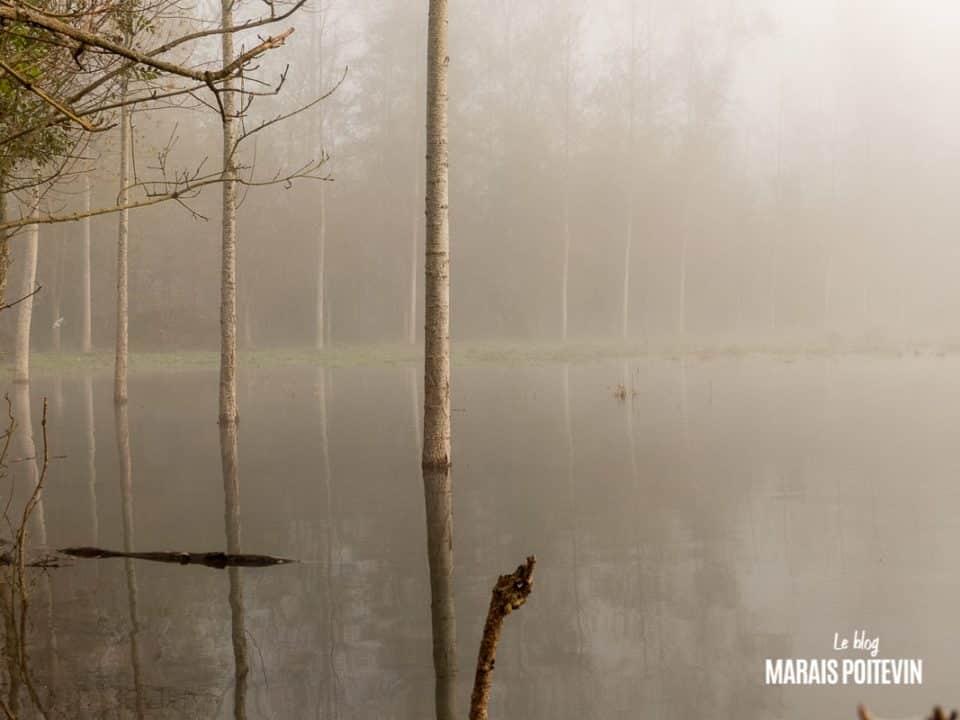 évaille brouillard marais poitevin novembre 2019 -18