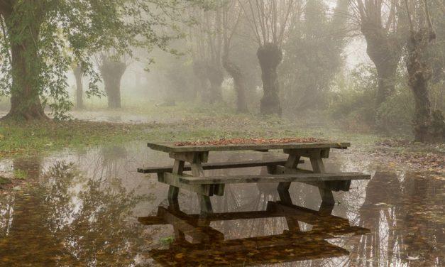 Crue et brouillard dans le Marais Poitevin