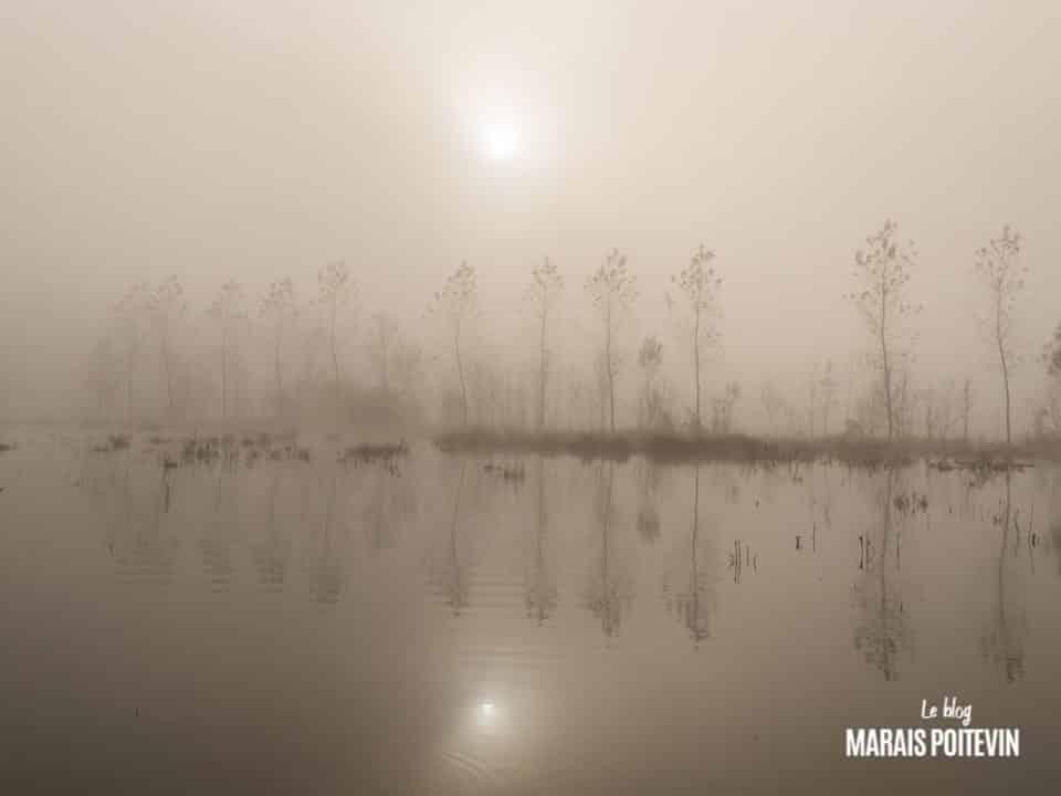 évaille brouillard marais poitevin novembre 2019 - 20