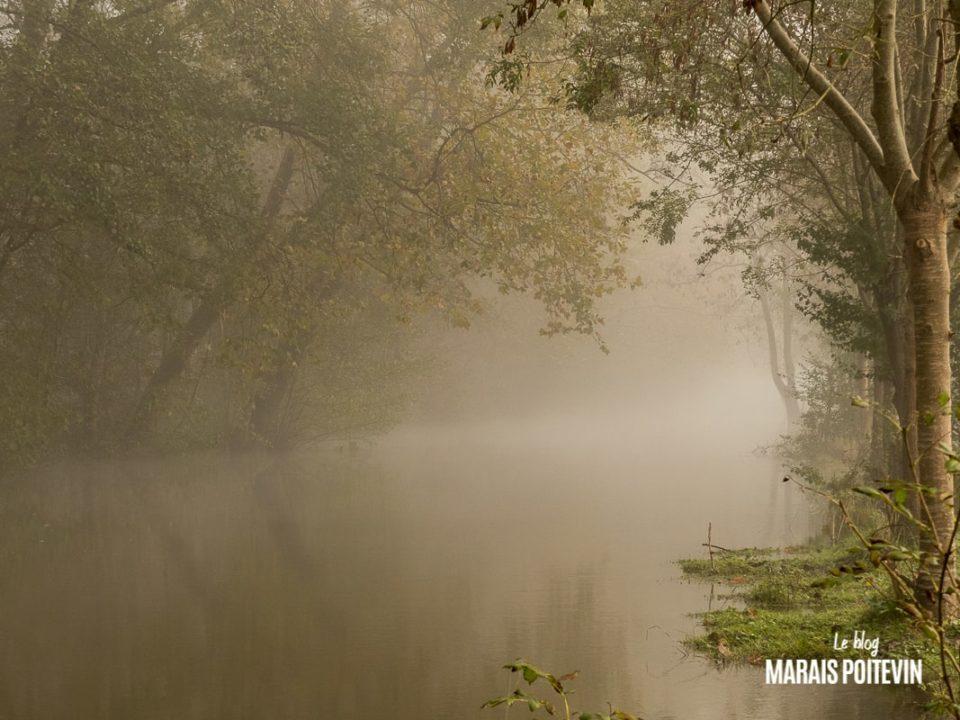 évaille brouillard marais poitevin novembre 2019 - 21