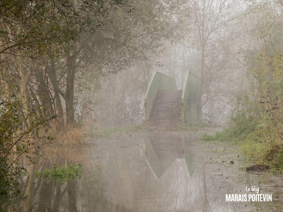 évaille brouillard marais poitevin novembre 2019 - 26