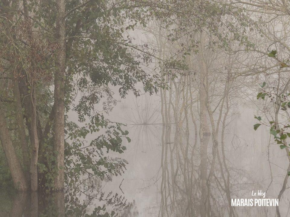 évaille brouillard marais poitevin novembre 2019 - 27