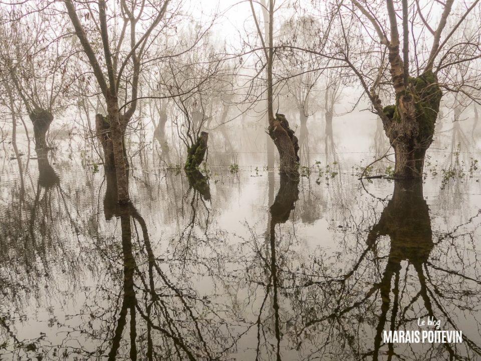 évaille brouillard marais poitevin novembre 2019 - 28