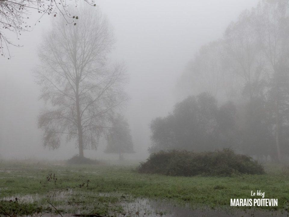 évaille brouillard marais poitevin novembre 2019 - 3