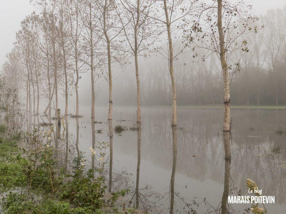 évaille brouillard marais poitevin novembre 2019 - 35